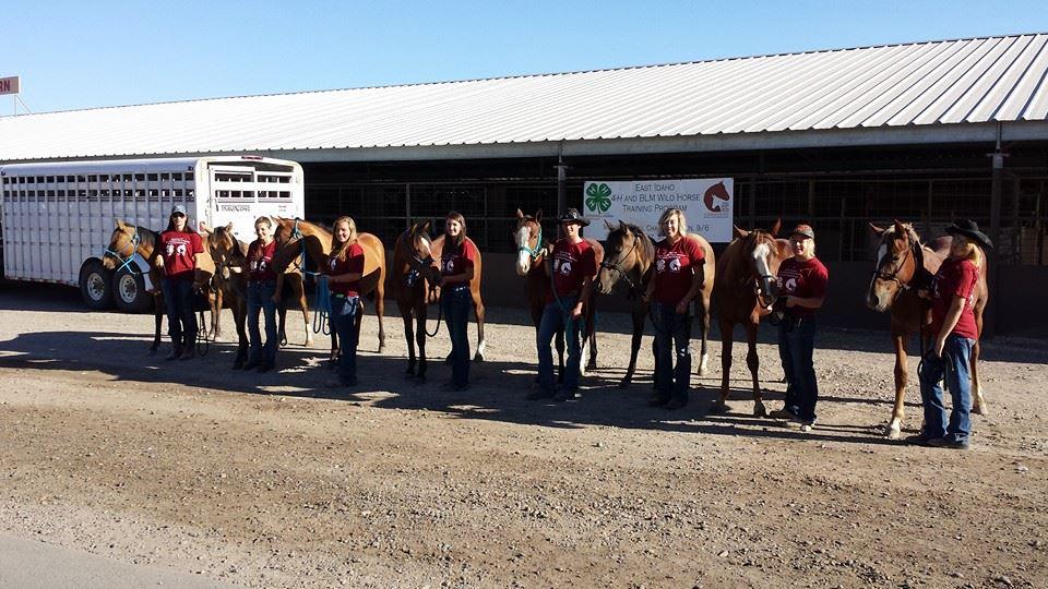 4H & BLM Mustang Adoption